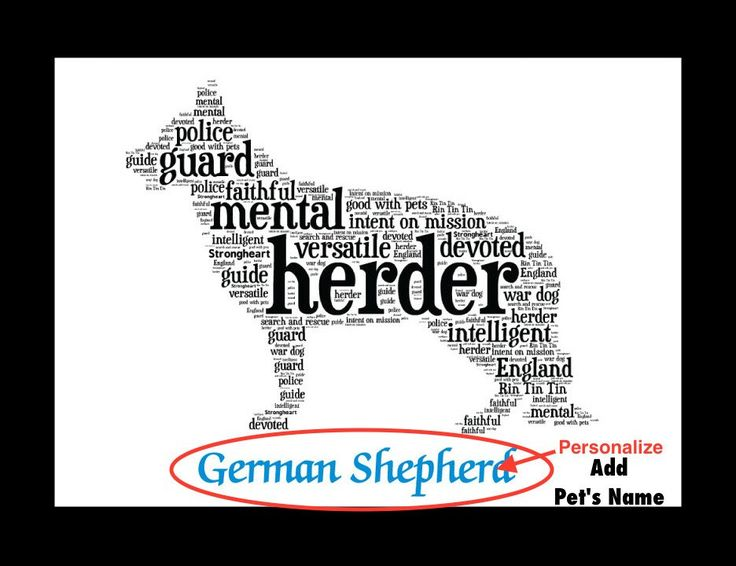 Traits of the German Shepherd One of the most popular dogs in the world, the German Shepherd has been attributed to the Bronze Age wolf. In fact, a a sheepdog of this type, but with a lighter coat, ex