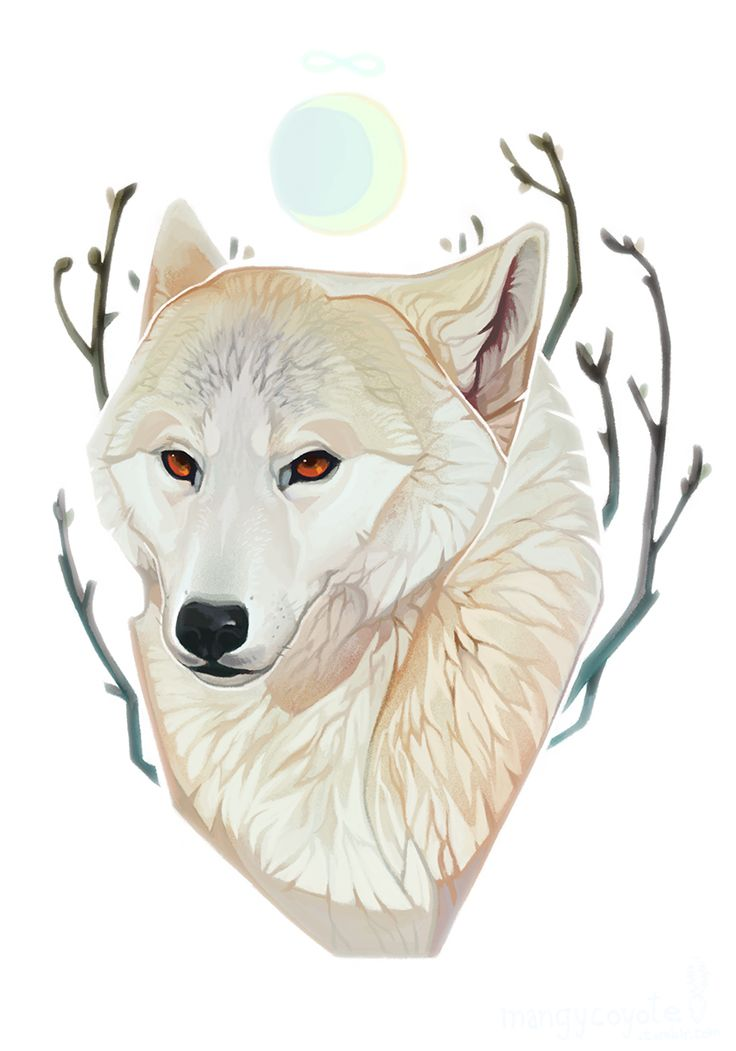 Mangycoyote tumblr animal pinterest for People s choice 65