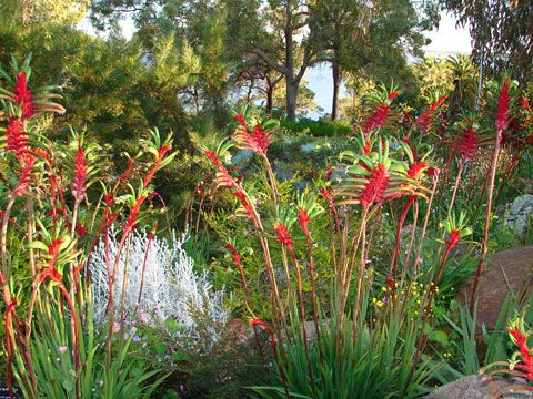 Australian natives are a great choice for your garden - growing easily and attracting native birds