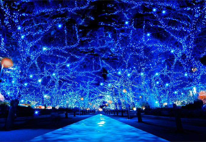 イルミネーションイベント「青の洞窟SHIBUYA」が、2016年11月22日(火)から2017年1月9日(月・祝)までの間、渋谷公園通りから代々木公園ケヤキ並木にて開催される。2014年の冬に東京・中...