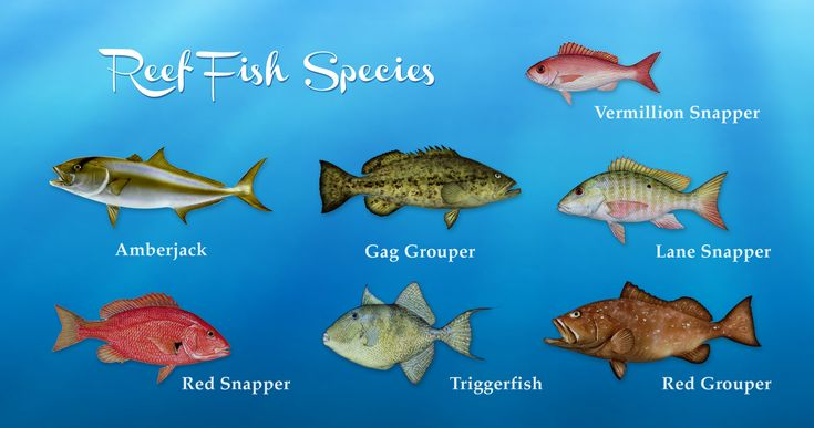 9 best fish pics charts etc images on pinterest for Types of fish in the gulf of mexico