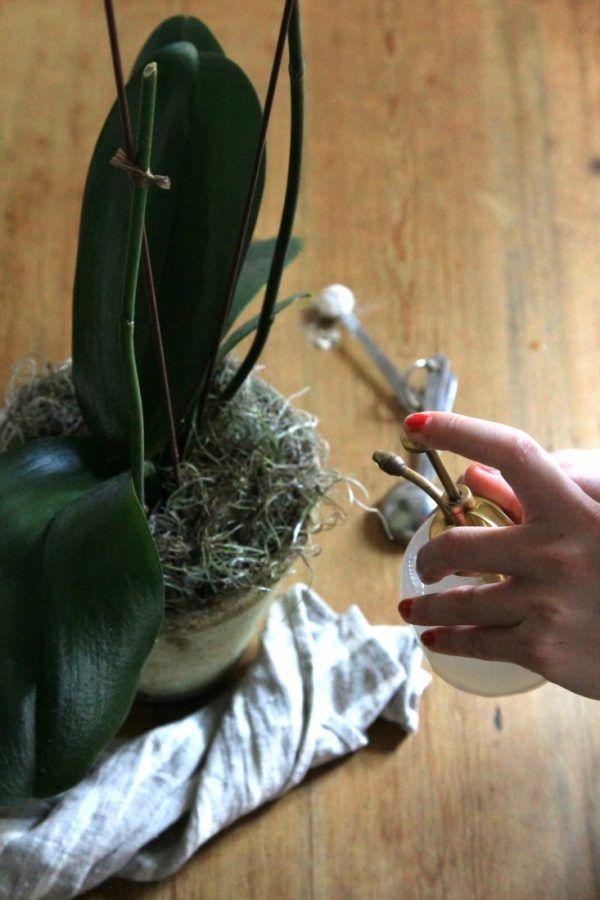 A pesar de su mala fama, cuidar las orquídeas y conseguir que sigan con vida no es tan complejo como dicen. Obviamente hay algunos secretitos que hay que conocer para que esa bonita orquídea que te…