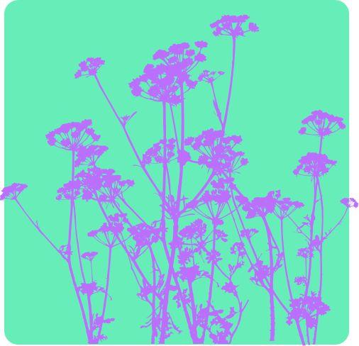 Parsley #vector #print #parsley #Bergfrida