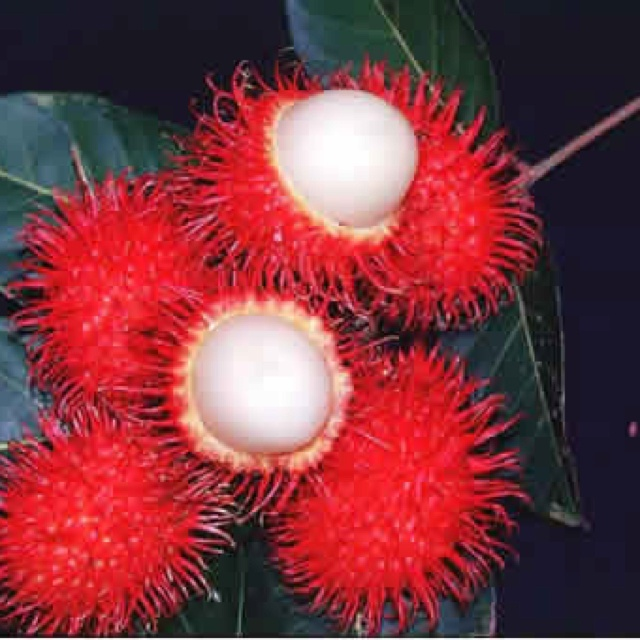 Indonesia Fruit: Rambutan, the taste is very sweet like Lychee