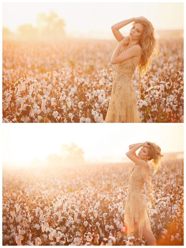 Sunrise in a Cotton Field » White Willow Photography