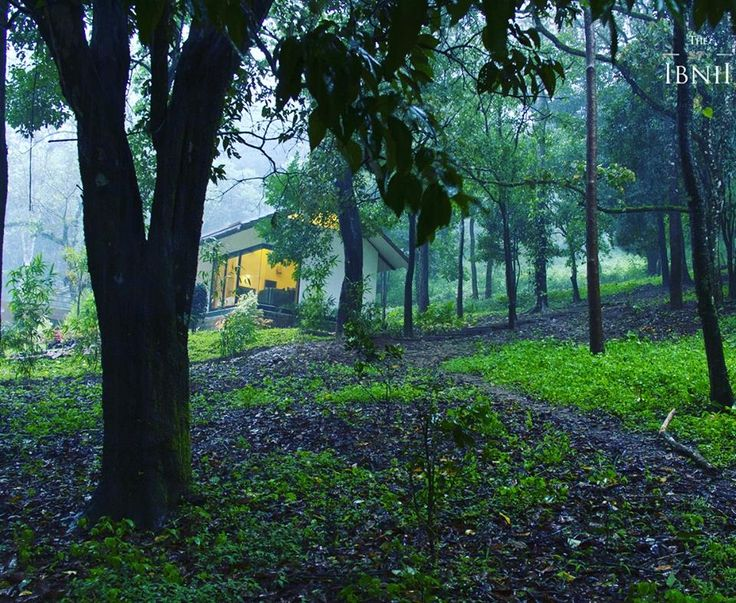 Stay at KopiLuvak, our luxury pool villas and experience the magic of misty mornings in dew-drenched woodlands. #TheIbnii_Coorg #resorts #resort #coorg #luxuryresort #nature #poolvillas #luxury #luxurystay