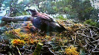 Grand old osprey: Lady returns to Loch of the Lowes nature reserve