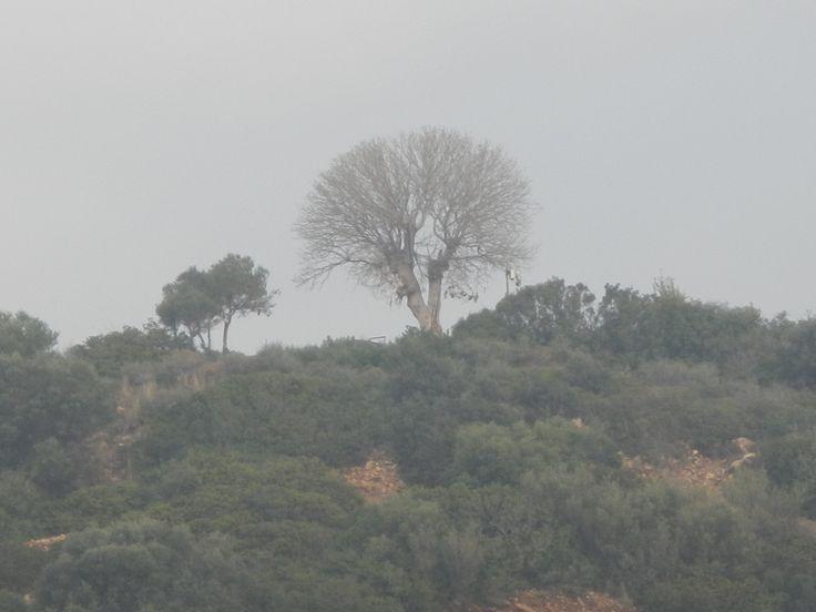 yapraksız ağaçlar . . .  :(