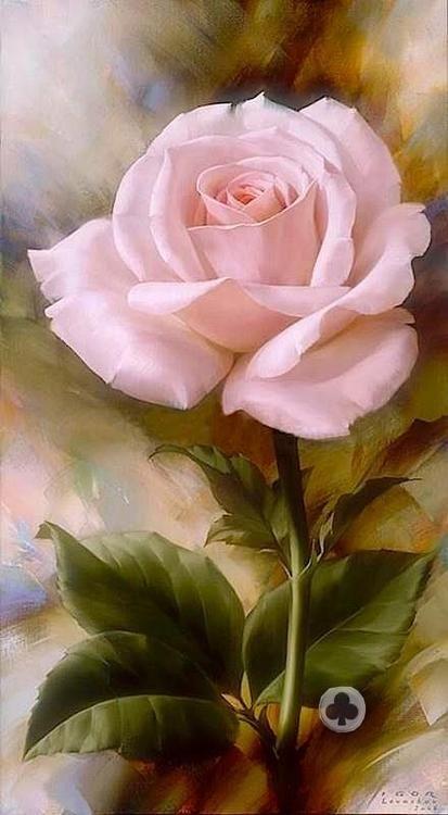 ╰♥╮Pink Rose