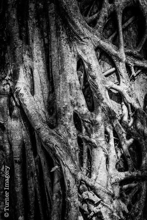 Interesting Rainforest tree