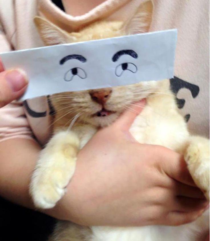 Kedilerin Yüz İfadeleri ile Bütünleşen Birbirinden Komik Çizimler