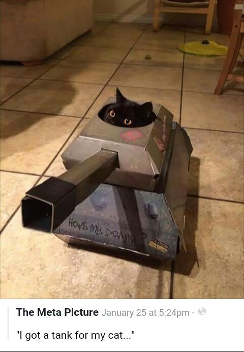 My cat needs this!!
