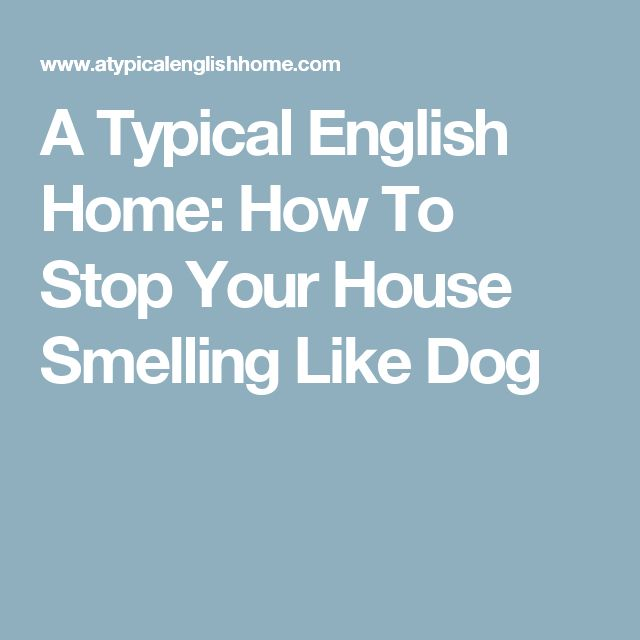 A Typical English Home: How To Stop Your House Smelling Like Dog