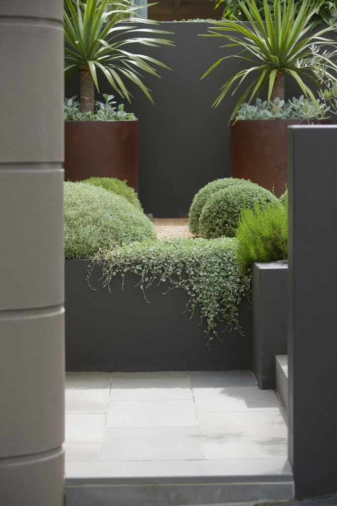 Similar planting for revised front garden; balls, dichondra 'Silver falls' and corten planters