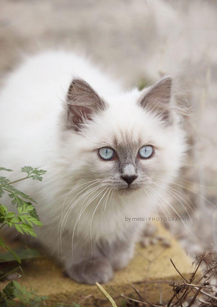 Bit more of a Soft or True Summer quality here, compared to the Soft Autumn kitten a few days ago. Pinker tones in the greys. Why does Summer influence make me think of cats and kittens? The dark grey eyeliner as pants, the white as a blouse, the eyes as the jewelry. Pretty nice picture.