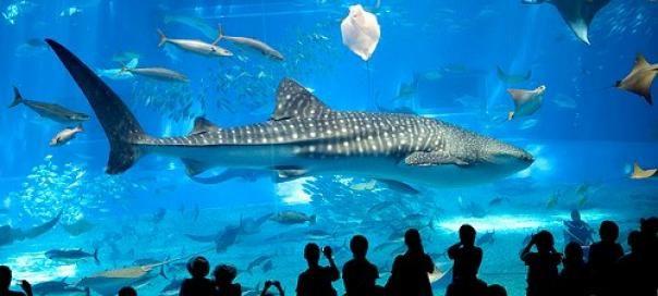 #barcelone #barcelona #барселона #чемзаняться #кудапойти #чтопосмотреть #развлечения #отдых #аквариум #l'aquarium Аквариум Барселоны (L'Aquàrium de Barcelona). Аквариум в Барселоне | Барселона10 - путеводитель по Барселоне