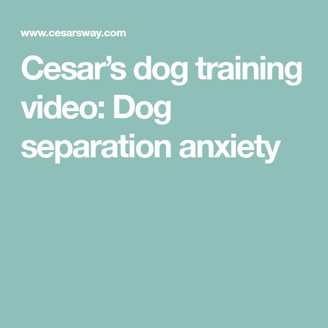 Cesar's dog training video: Dog separation anxiety #dogseparationanxiety