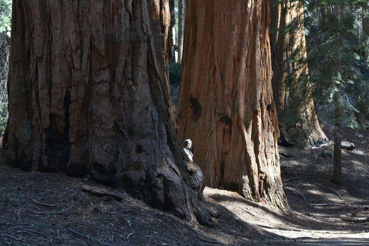 Kalifornijskie skarby: przyrodnicze skarby gór Sierra Nevada - http://phototravel.pl/kalifornijskie-skarby-przyrodnicze-skarby-gor-sierra-nevada.html