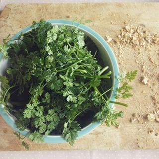 Perifollo. | 16 Plantas para sembrar y cocinar en casa