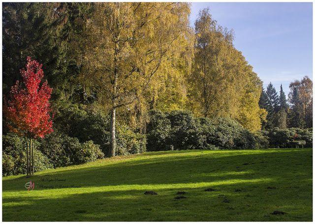 Gabriele Manhold Photography: Herbst im Bürgerpark in Bremerhaven