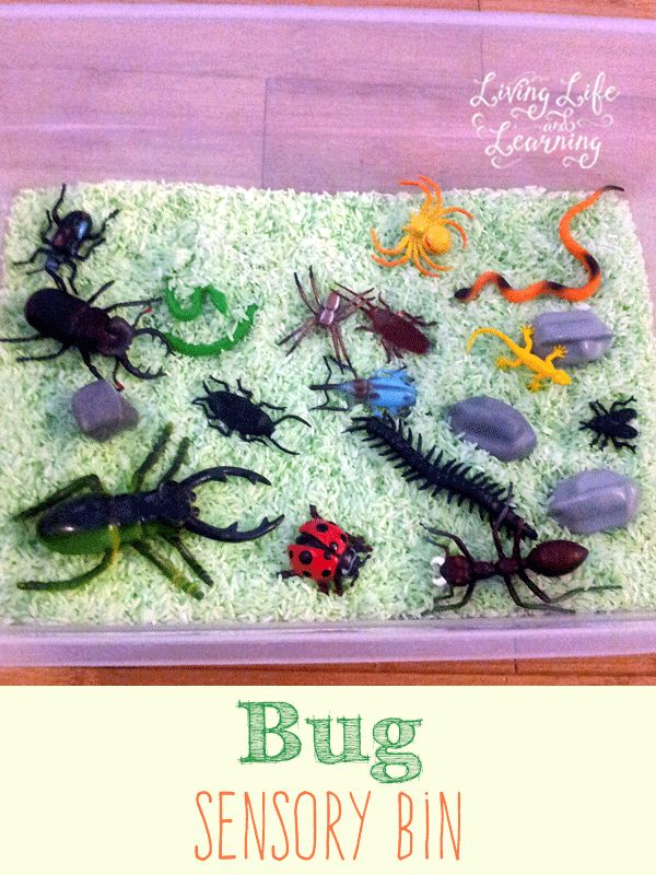 Great Bug sensory bin to learn about insects and have fun with them.