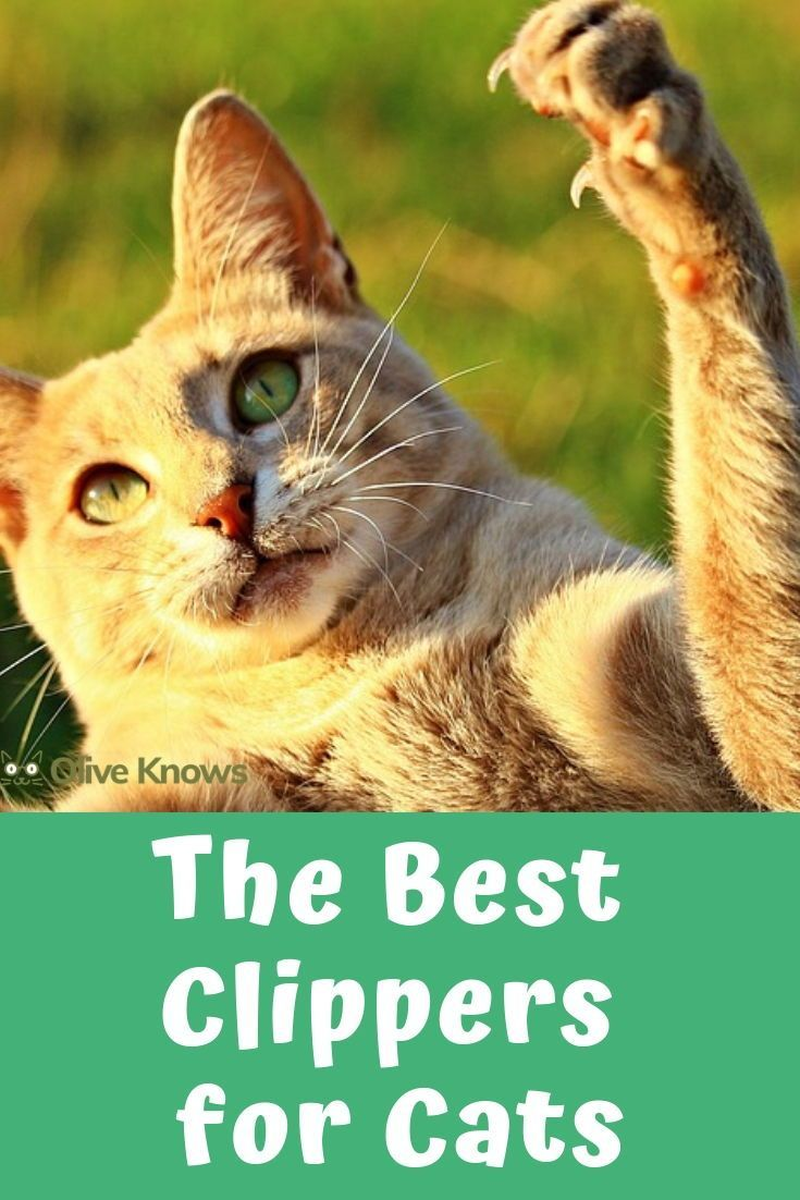 Best Clippers For Cats 2020 Edition Best Cat Clipper Guide Oliveknows Cool Cats Cats Cat Safety