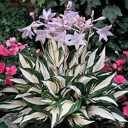 Find This Pin And More On Backyard Bliss: Low Light Plants By Nettap.
