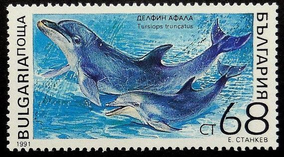 This Common bottlenose dolphin Tursiops truncatus Postage Stamp Art is handmade by our family in Vancouver, Canada. Since 2001, weve been making and selling our art at craft fairs. We use only genuine, collectible postage stamps. Each piece is about the size of your hand (3.6 x 2.8). We choose from postage stamps worldwide and craft the wood frames in our studio. Were humbled that over ten thousand people have given our art to their friends and loved ones.  Thanks for browsing our…
