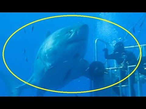 Is This Megalodon's Relative? Discovery Channel Films Mega Shark ...