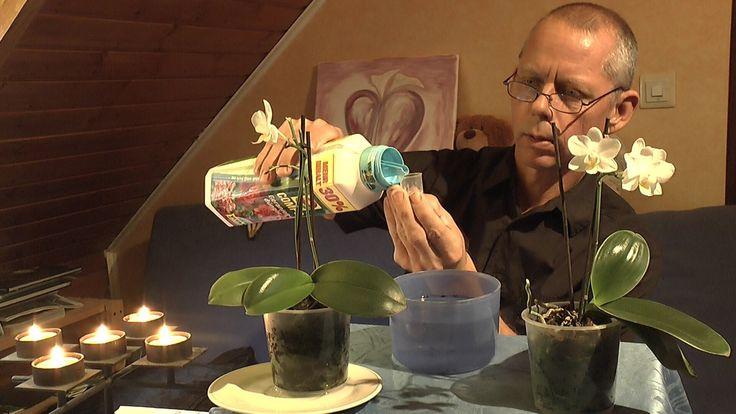 Orchideen Pflege - Phalaenopsis Teil 1 Zimmerpflanzen