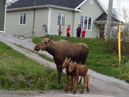 Time to take the two kids Christmas shopping I suppose. Taken in St. Anthony Newfoundland. Credit Facebook Newfoundland