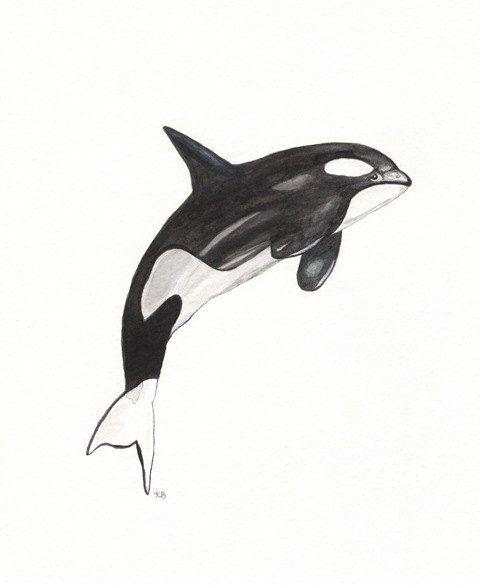 Orca Whale  by kellybermudez
