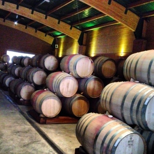 A Trip to Vina Casas Del Bosque In Casablanca Valley Chile #winery #winetours #wine