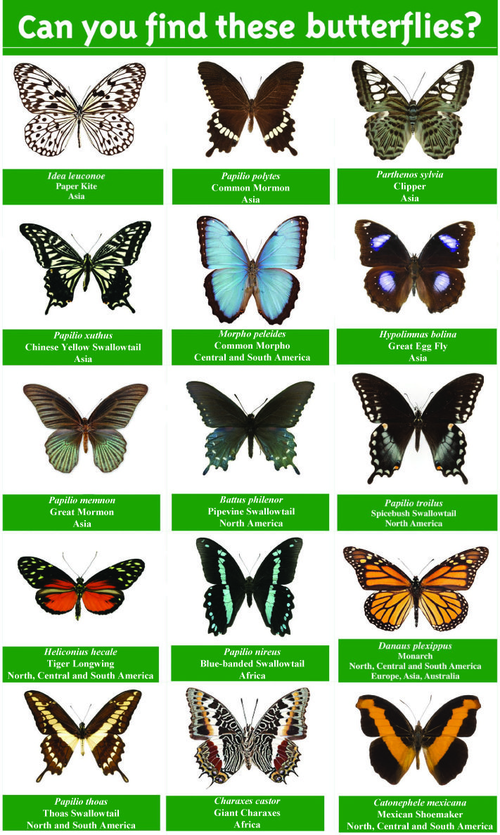17 Best images about butterflies on Pinterest | Purple ...