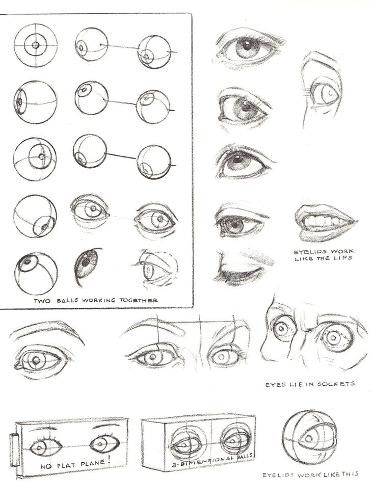 Foundation Figure: Day 17 - facial features https://www.facebook.com/CharacterDesignReferences http://www.pinterest.com/characterdesigh #anatomy