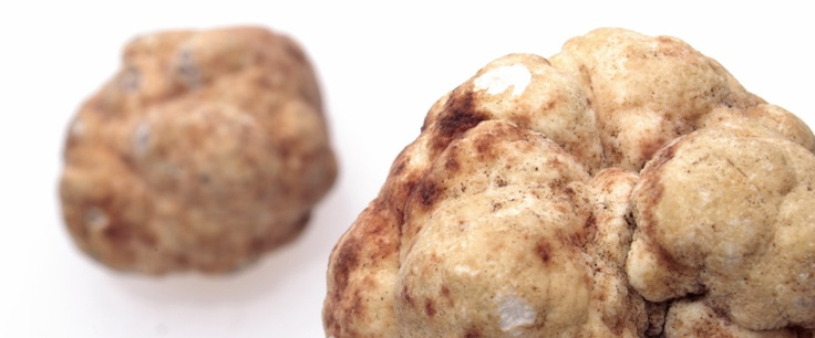 Fresh Bianchetto Truffle   Appennino Funghi e Tartufi