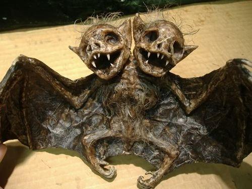 TWO HEADED BAT SIDESHOW FREAK GAFF