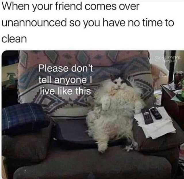 Imgur Com Friends Funny Animal Memes Funny Relatable Memes