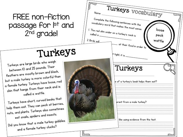 FREE close read passage about turkeys! Perfect for 1st and 2nd graders around Thanksgiving