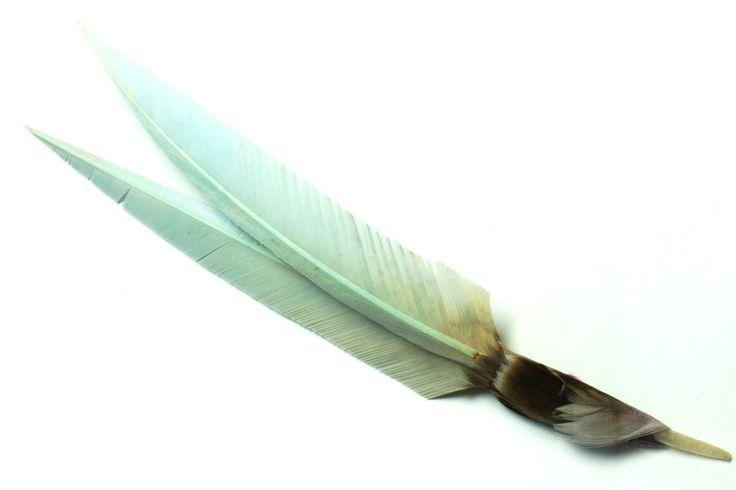 4877. Goose quill bird trim.