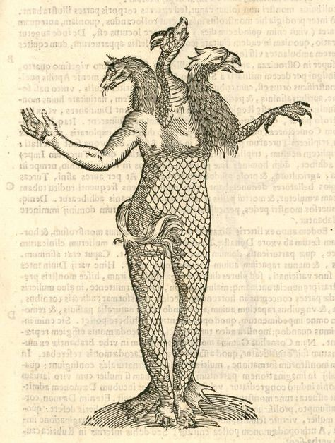 Monstrum triceps capite Vulpis, Draconis, & Aquilae.  (Monstrorum Historia:  Woodcut illustrations from Aldrovandi's 'History of Monsters')