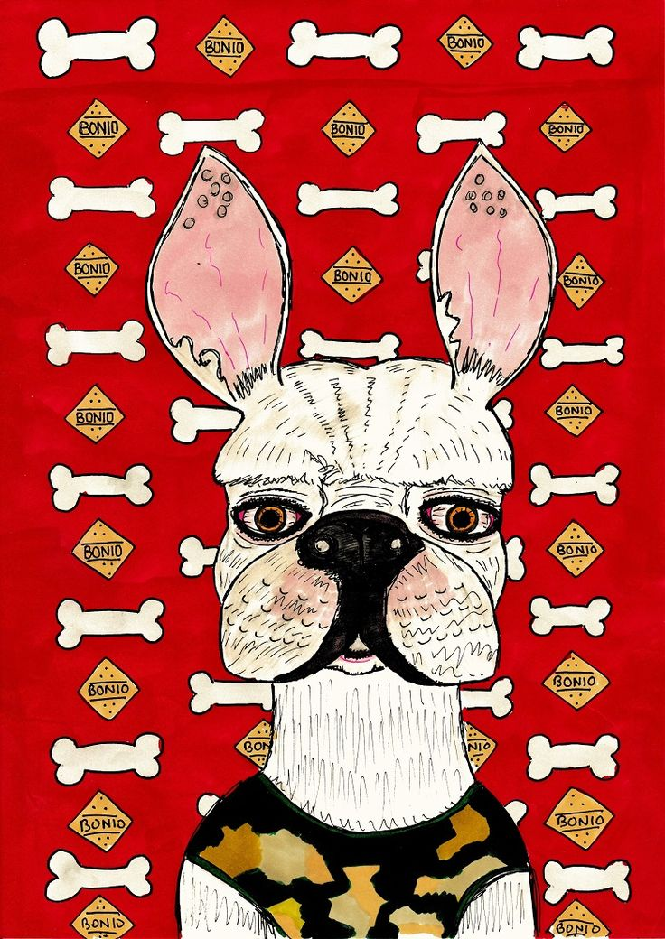 """Illustration of a French bulldog titled """"Charlie Bones"""".  This A4 illustration was drawn with fine liner pen with colour added using promarkers. #illustration #drawing #frenchbulldog #frenchie"""