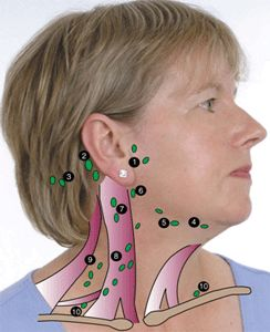 Plymouth Hospitals: Your lymph nodes - Where they are, what they do, and how to check for inflammation.