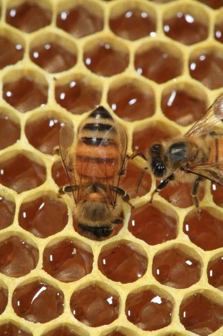 Honey + Bees!  Call A1 Bee Specialists in Bloomfield Hills, MI today at (248) 467-4849 to schedule an appointment if you've got a stinging insect problem around your house or place of business!