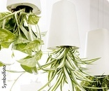 hängender Übertopf     #bellaflora #plants #flowerpot #blumentopf #pflanzen