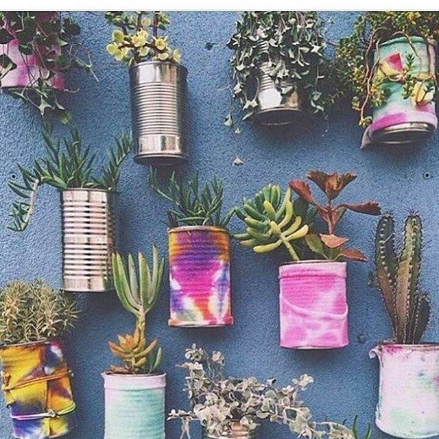 Colour your walls, your house, your heart. Simple wall goals!  By @bohotribe  .  .  #planthousecommunity #indoorplants #succulent #cactus #succulove #interiors #indoorgarden #homedecor #indoorgardening #plantlove #plants #interiordesign #succulove #iloveplants #succulents #plantas #cactuslove #goals #urbanjunglebloggers    #Regram via @plant.house.community