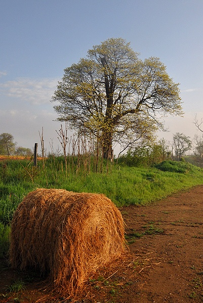 Hay and Flowering tree along the Valley Trail at Brunswick Crossing, a planned community in Brunswick, Maryland