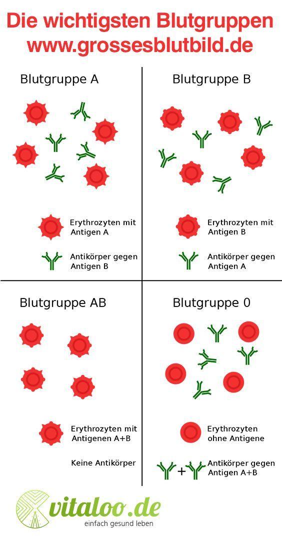 Die wichtigsten Blutgruppen » Übersicht im AB0-System Nicht jeder Mensch hat …