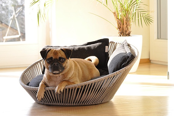 Cute doggy bed