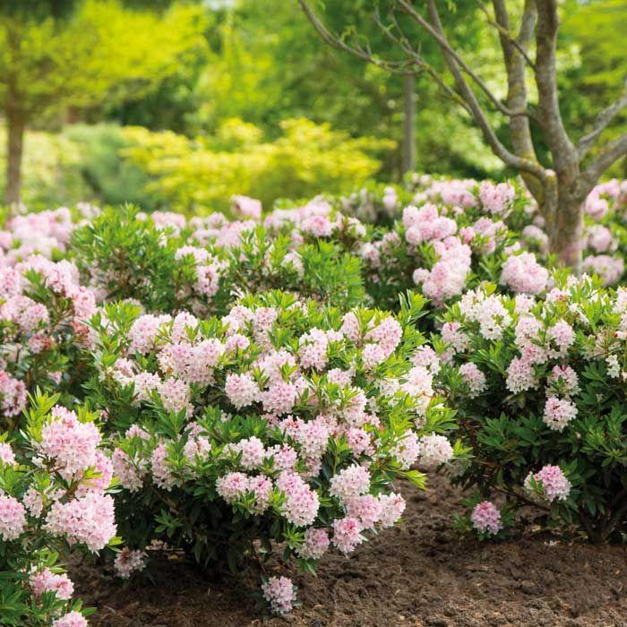 die besten 25 bloombux ideen auf pinterest rosa garten. Black Bedroom Furniture Sets. Home Design Ideas